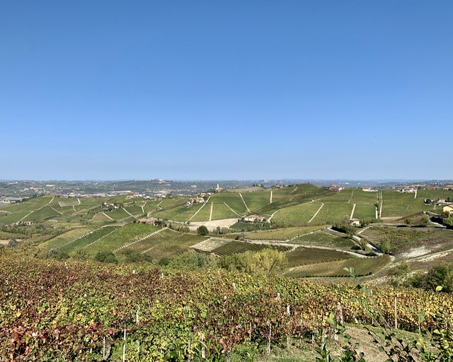 barbaresco-vineyards