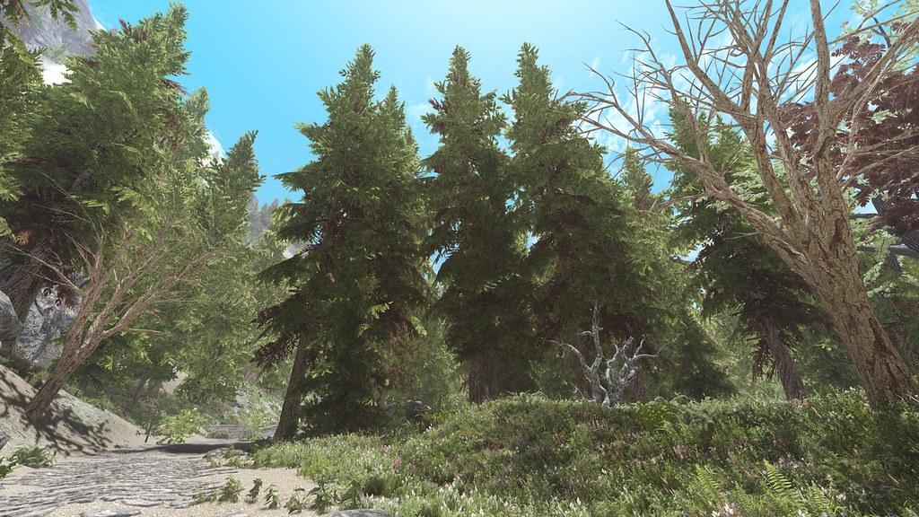 skyrim dark forest