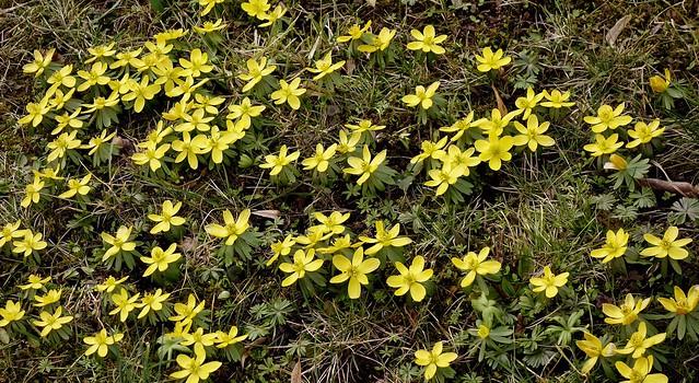 Blumen, Blüten, blossoms and flowers (serie) 76703/11579