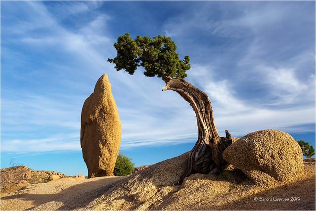 Juniper & Obelisk