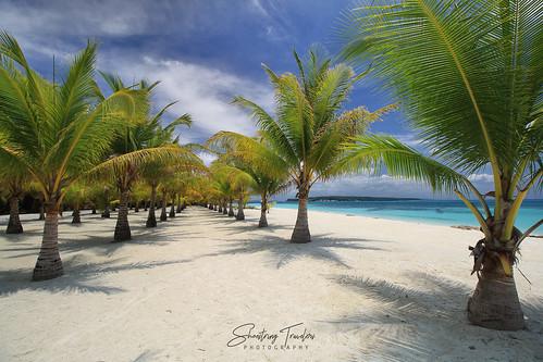 portavega beach dimasalang masbate philippines southeastasia palms tree tropical landscape seascape sea water waterscape outdoor seaside shore coast