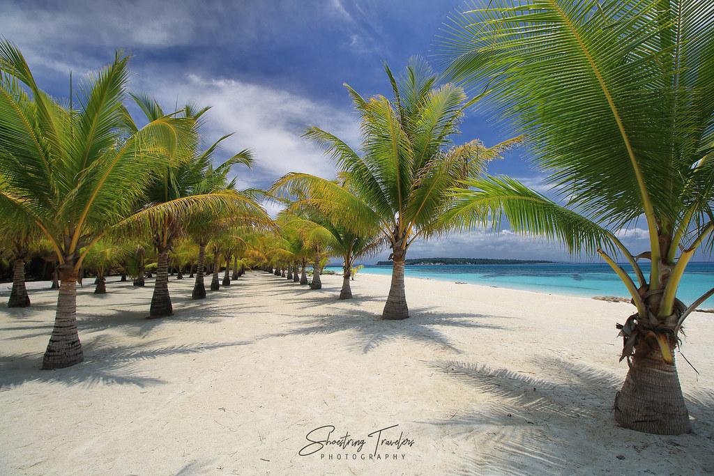 rows of dwarf coconut trees, Porta Vega
