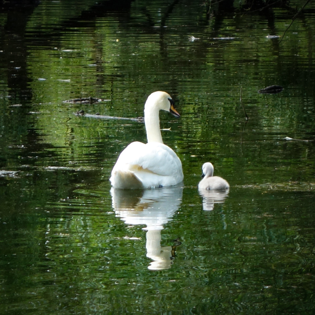 Mother and Child, Priory Gardens, Orpington