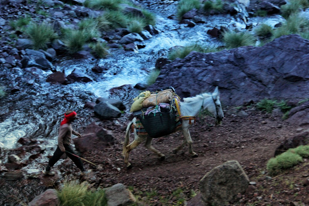 The mules were much better at the river crossings than I was!