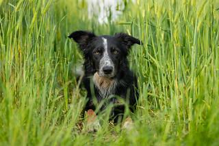 in corn field