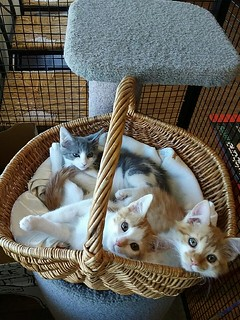 Basket full of kittens
