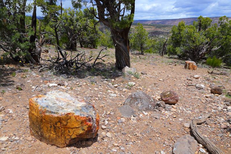 IMG_7541 Petrified Forest Trail