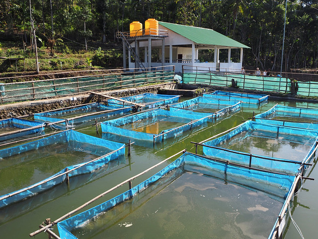 New private GIFT hatchery in Timor-Leste boosts fish seed