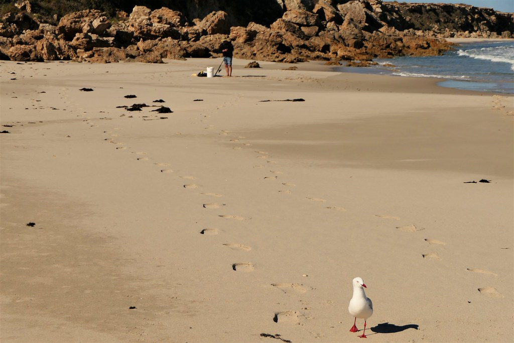 The Day of the Seagull #6: You got something for me?
