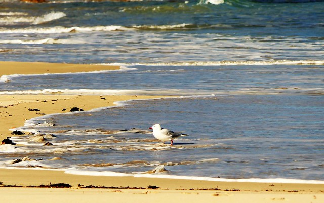 The Day of the Seagull #4:  What's in the Water?