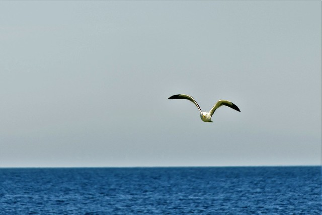 The Day of the Seagull #5: Wings over the Waves