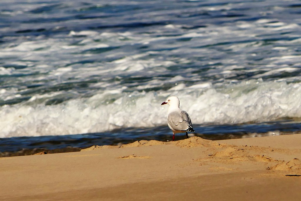 The Day of the Seagull #2:  Watching the Waves