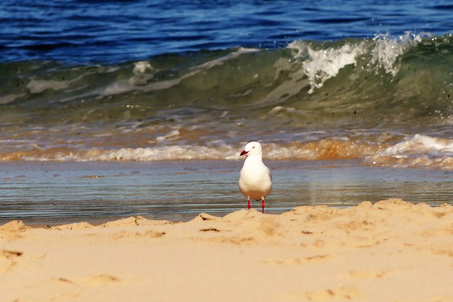 The Day of the Seagull #3: Surf, Sand and Sea