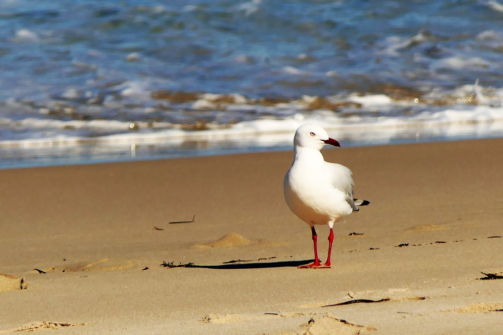 The Day of the Seagull #1:  A Walk on the Beach