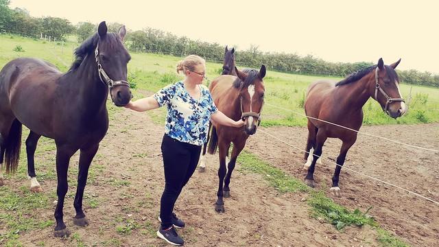 Ann with her horses, Jordrup, Denmark