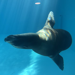 Sea Lion - Zoo Marine - Albufeira - Portugal