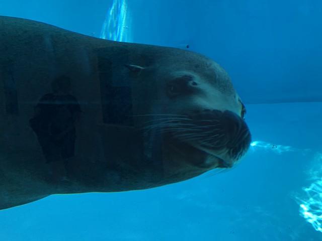 I See You - Sea Lion - Zoo Marine - Albufeira - Portugal