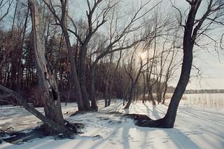 Вмерзший лес / Frozen forest