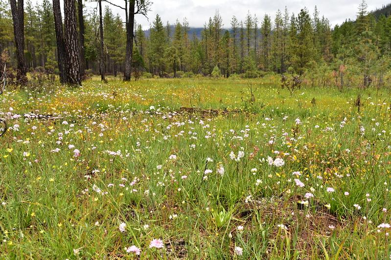 Days Gulch Botanical Area