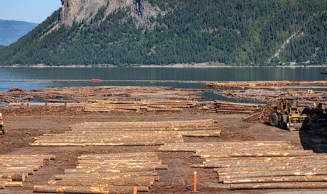 Preview of our holiday in Canada and Alaska. - Logging alongside Shuspak Lake, BC, Canada.