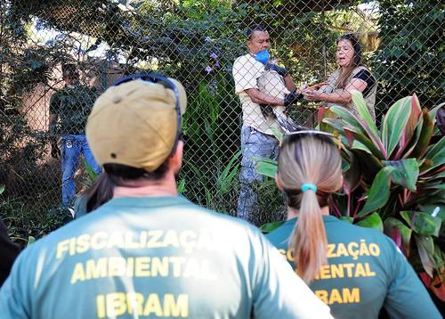 GDF oferece curso de resgate de fauna em incêndio florestal