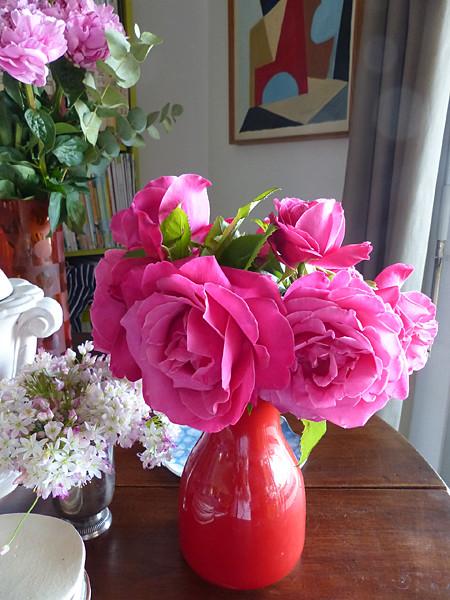 les roses de Grasse