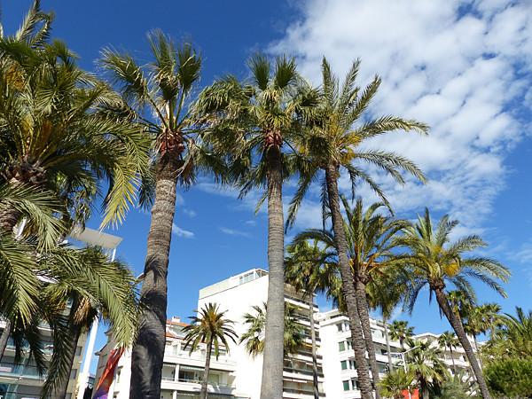 la Croisette et ses palmiers