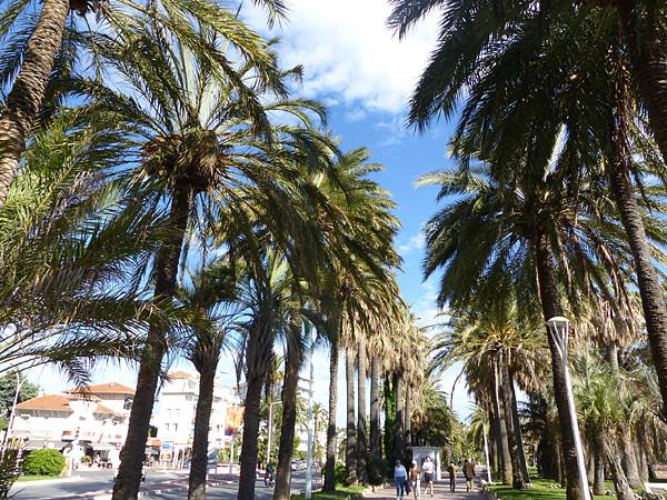 les palmiers de la Croisette