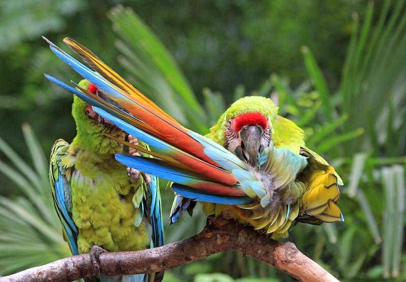 Portrait d'oiseaux - Page 2 48051313111_fc9d60174f_b