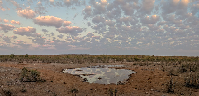Moringa waterhole @ sunrise (no animals)