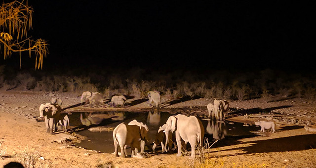 Moringa waterhole after dinner (all the elephants! and 1 rhino!)