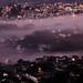 Mountain City Mist, 2019