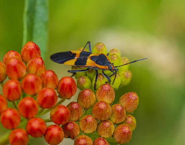 Bug-3010
