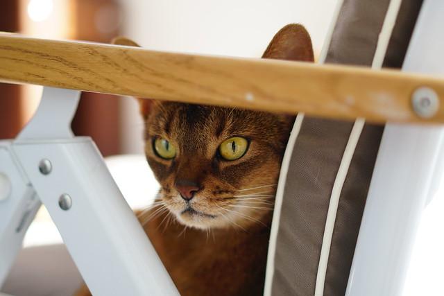 Lizzie watching the birds