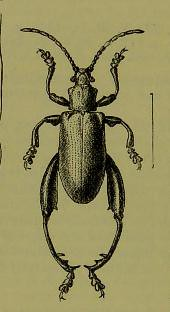 This image is taken from Page 8 of The Fauna of British India, including Ceylon and Burma [electroni