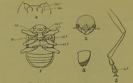 This image is taken from Page 10 of The Fauna of British India, including Ceylon and Burma [electron