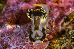 nudibranch10May31-19