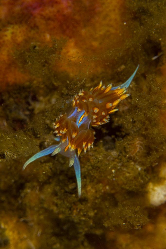 nudibranch7May31-19