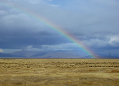 newzealand rainbow