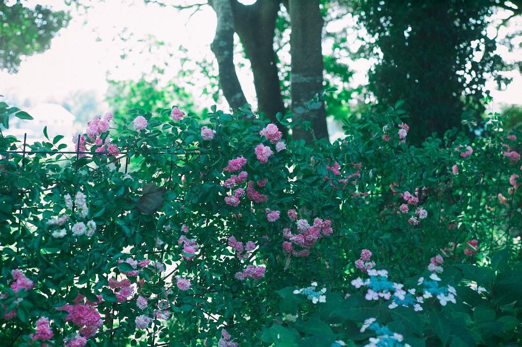 Sakano garden