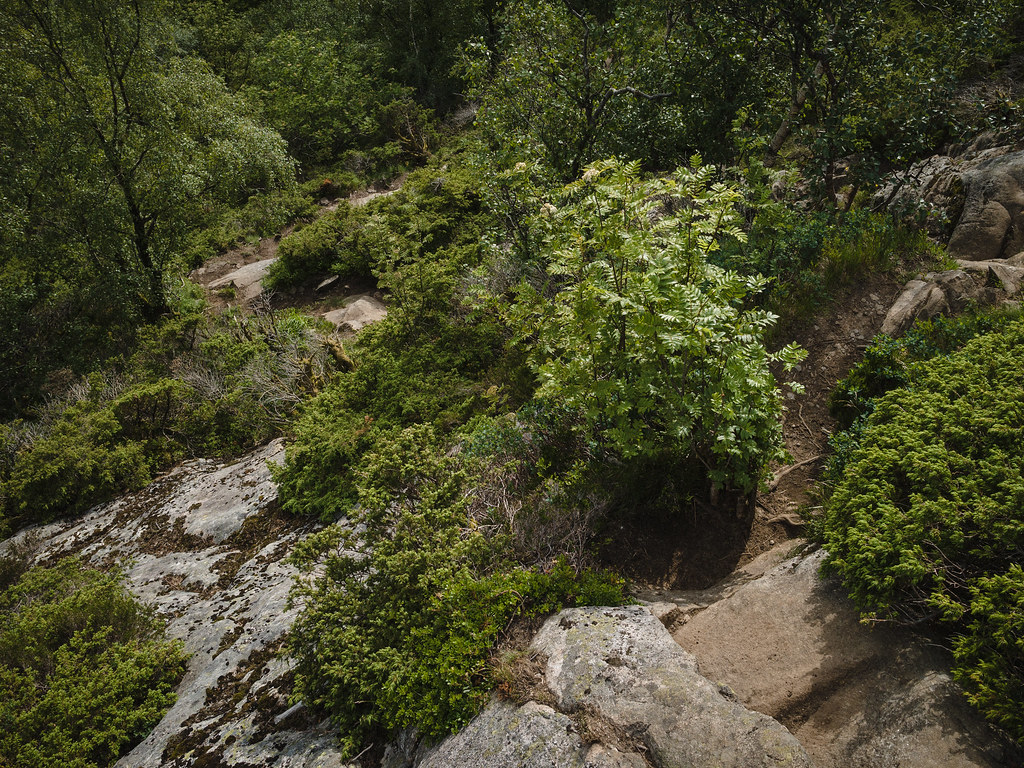 A view down a steep hiking trail in the woods.
