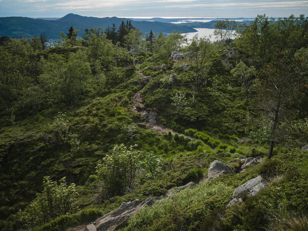 View along a crooked trail through woods, fjord and mountains in the background.