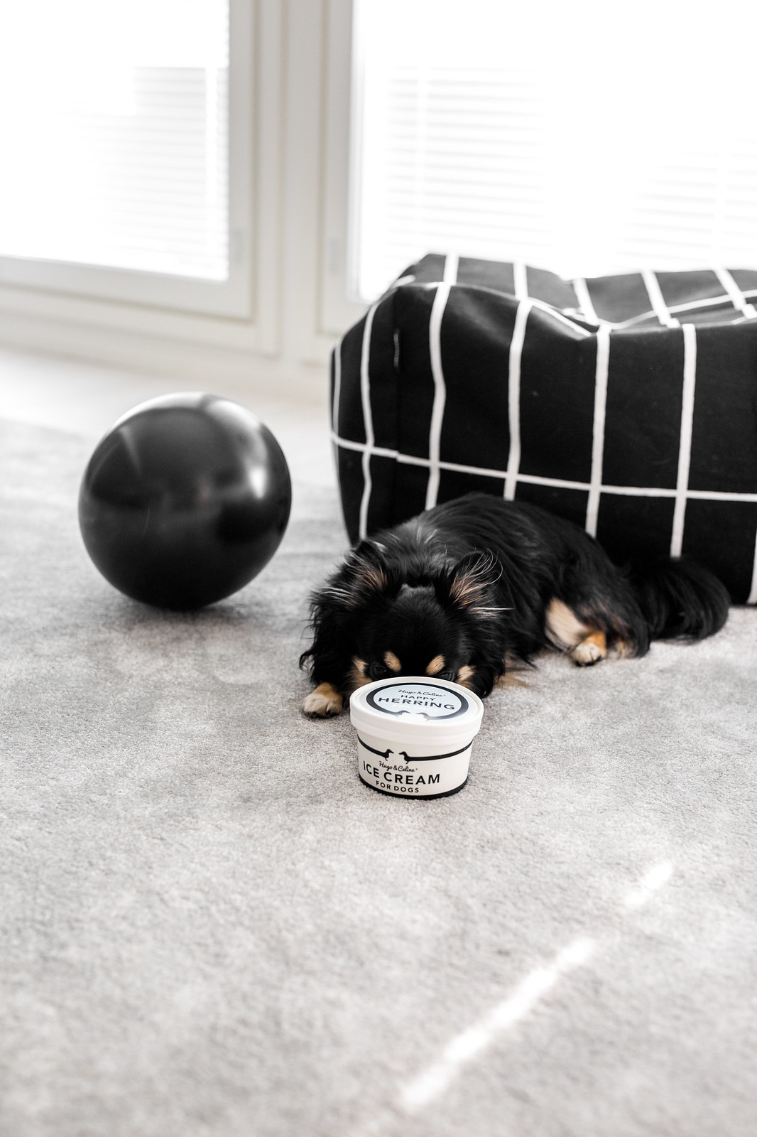 koiran jäätelö