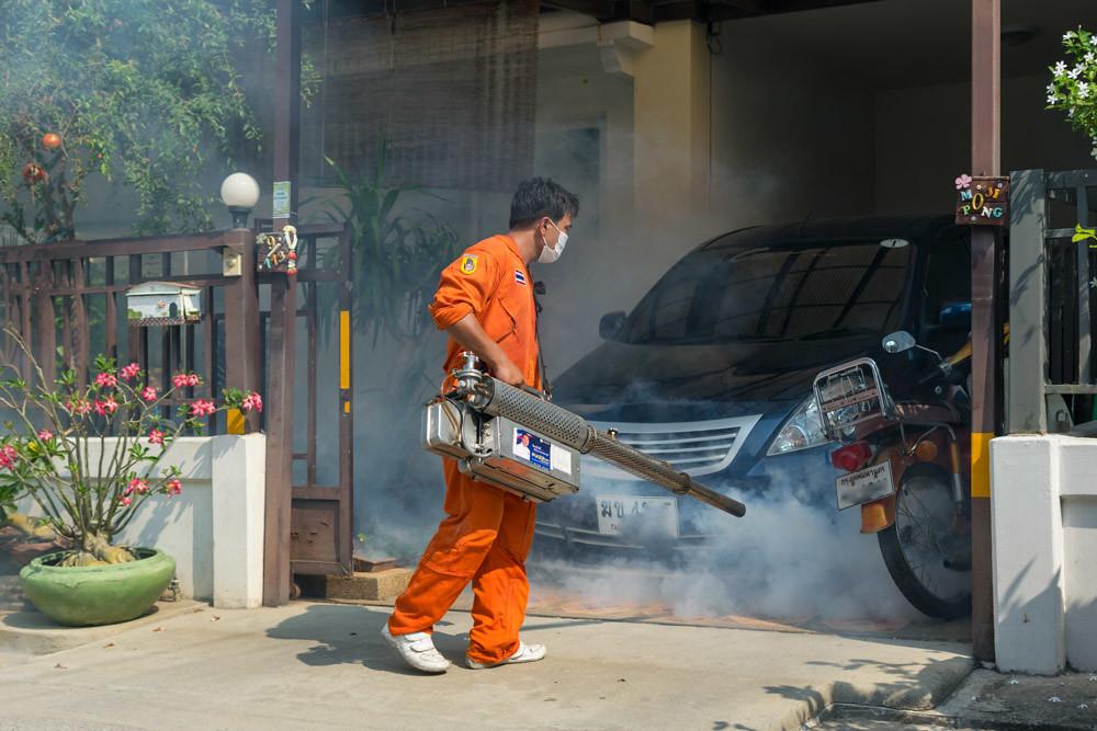 Денге в Таиланде
