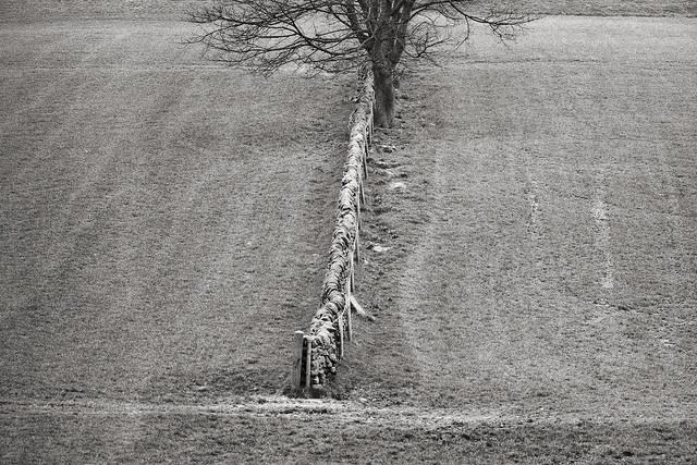 Timbersbrook, April 1995