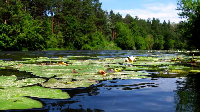 Summer day on the river Psel, Lebedin, Sumy region. Ukraine.