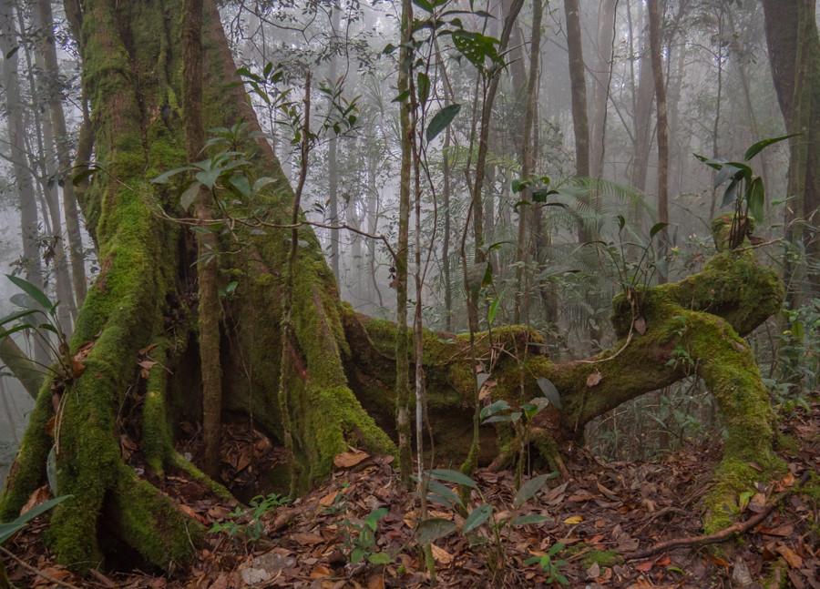 Kinabalu forest