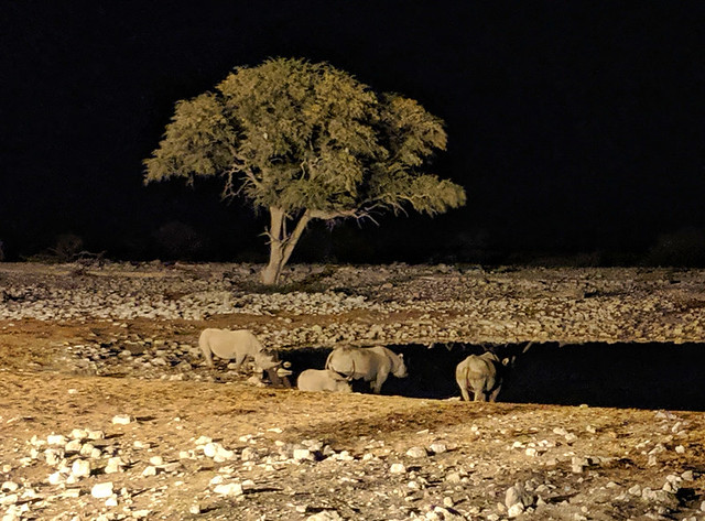 rhinos @ Okaukuejo waterhole (12:15am)