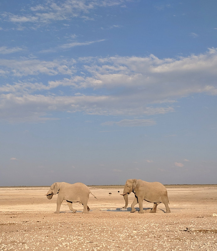 elephants arriving @ Nebrowni waterhole
