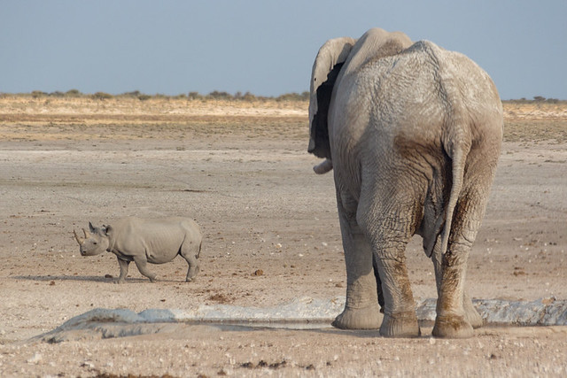 rhino and elephant @ Nebrowni waterhole